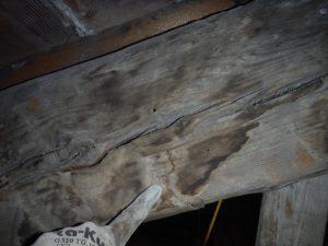 classificazione-a-vista-legno-3